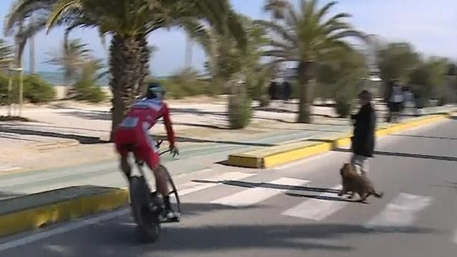 Peter Sagan narrowly avoids dog walker on Tirreno-Adriatico time trial ( Video )